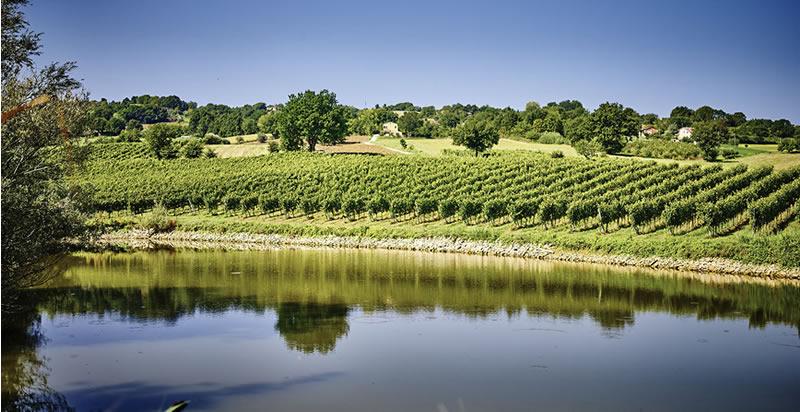 IL TERRITORIO | Andrea Felici Azienda Agricola Biologica | Verdicchio | Vini  dei Castelli di Jesi | Apiro – Marche - Italia